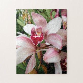 Cymbidium Orchids Blush with Pink Spotted Lip Jigsaw Puzzle