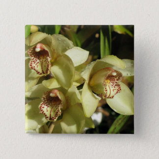 Cymbidium Orchids button