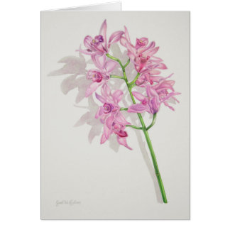 Cymbidium Orchids Card
