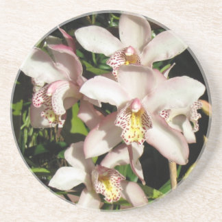 Cymbidium Orchids coaster