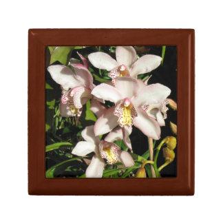 Cymbidium Orchids gift box, choose color & size Gift Box
