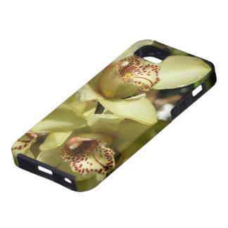 Cymbidium Orchids iPhone 5 Case-Mate