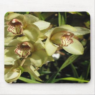 Cymbidium Orchids mousepad