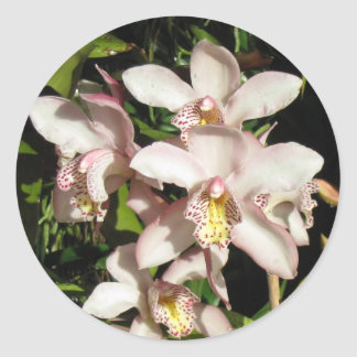Cymbidium Orchids stickers