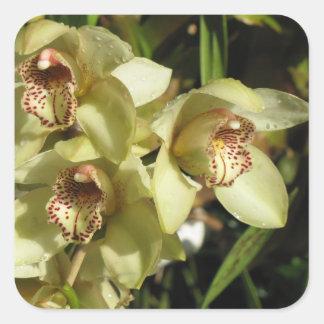 Cymbidium Orchids stickers