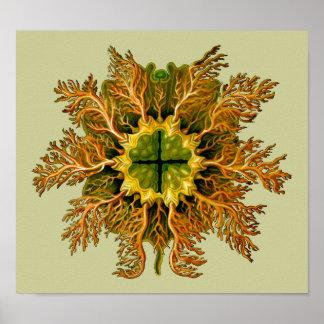 Cynthia melocactus Ernst Haeckel Fine Art Poster