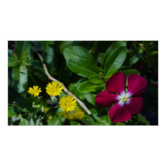 Cynthias and Periwinkle Poster