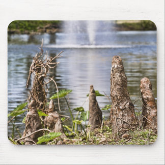 Cypress Knee Mouse Pad