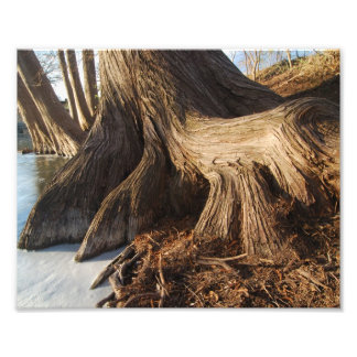 Cypress Roots Photo Art
