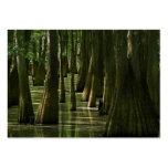 Cypress Swamp ATC Card Business Card