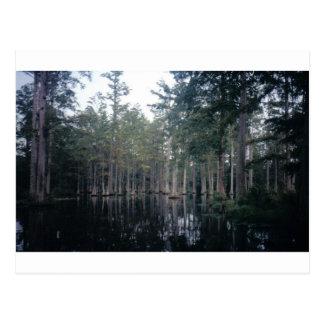 Cypress Swamp in Charleston, SC Postcard