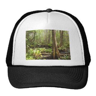 Cypress tree hats