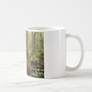 Cypress tree coffee mugs