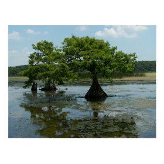Cypress Trees Post Card