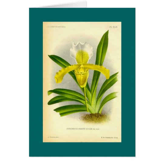 Cypripedium Insigne - Lady's Slipper Orchid Card