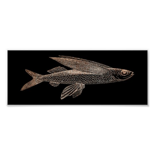 Cypselurus Flying Fish Ocean Sea Life Black Gold