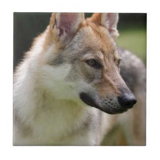 Czechoslovakian Wolfdog Tile