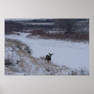 D0016 Mule Deer Doe Poster