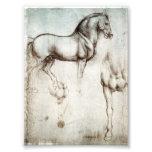 Da Vinci Horse Photograph