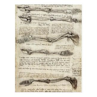 Da Vinci, Leonardo - Study of Anatomy Postcard