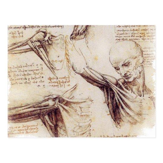 da Vinci -- Shoulder Sketch Postcard