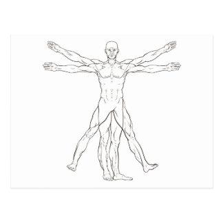 Da Vinci Style Vitruvian Man Postcard