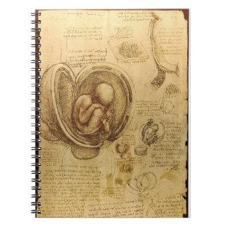 Da Vinci's Fetus Anatomy Notebook
