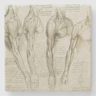 Da Vinci's Human Arm Anatomy Stone Beverage Coaster