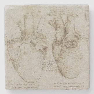 Da Vinci's Human Heart Anatomy Stone Coaster