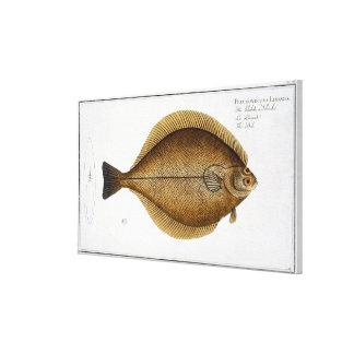 Dab (Pleuronectes Limanda) plate XLVI from 'Ichthy Canvas Print