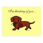 Dachshund and a flower cartoon post card
