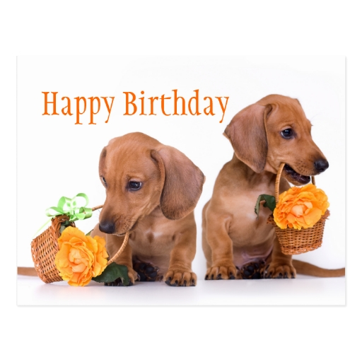 Happy Birthday Funny Weiner Dog Images & Pictures - Becuo