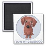 Dachshund (Brown) Granddog Square Magnet