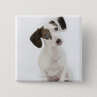 Dachshund/Chihuahua female puppy 15 Cm Square Badge