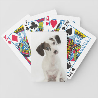 Dachshund/Chihuahua female puppy Bicycle Playing Cards