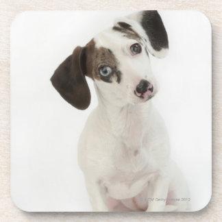 Dachshund/Chihuahua female puppy Coasters