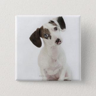 Dachshund/Chihuahua female puppy staring 15 Cm Square Badge