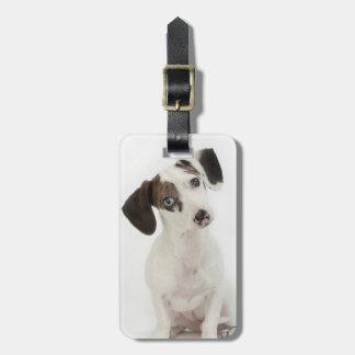 Dachshund/Chihuahua female puppy staring Luggage Tag
