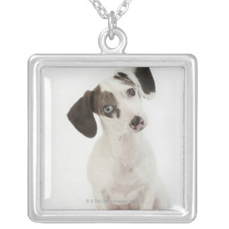 Dachshund/Chihuahua female puppy staring Silver Plated Necklace
