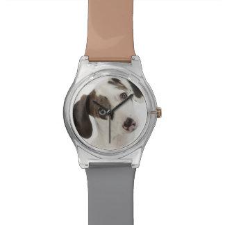 Dachshund/Chihuahua female puppy staring Watch