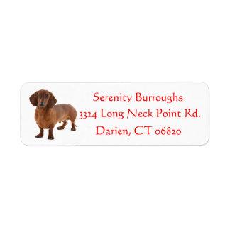 Dachshund Chocolate Brown Puppy Dog Red Return Address Label