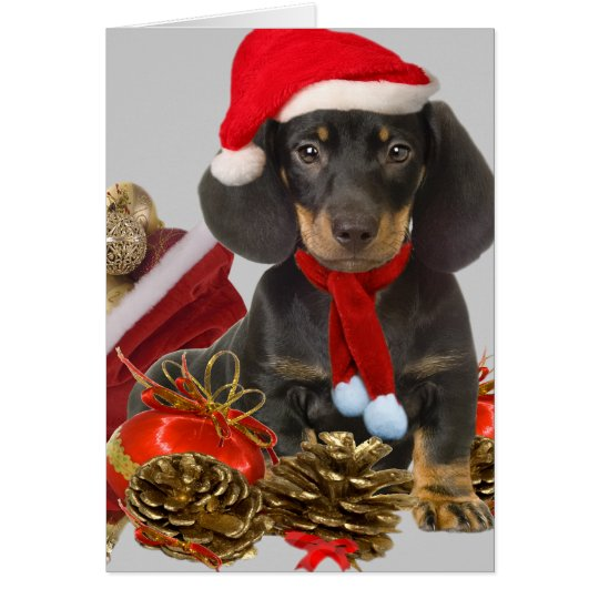 Dachshund christmas and ornaments card