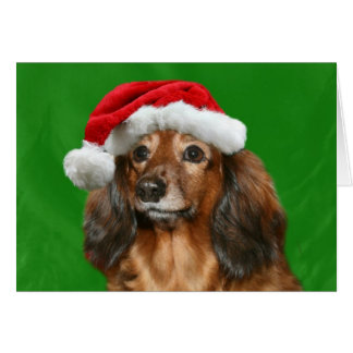 Dachshund Christmas Greeting Card