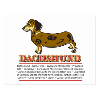 Dachshund Dictionary Postcard