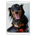 Dachshund in a drinking fountain! greeting card