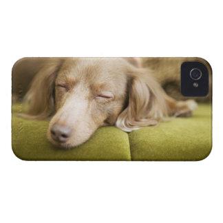 Dachshund iPhone 4 Case-Mate Case