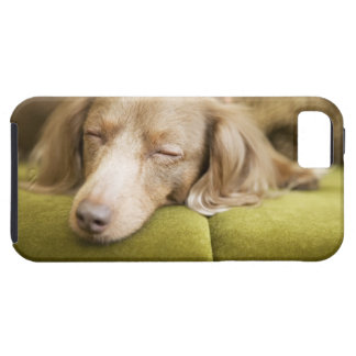 Dachshund iPhone 5 Case