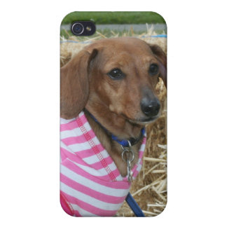 Dachshund Case For iPhone 4