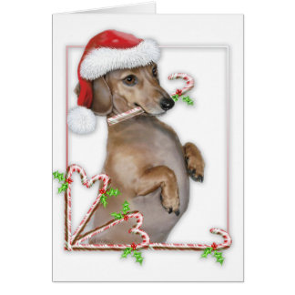 Dachshund Lilly's Candy Canes Greeting Cards