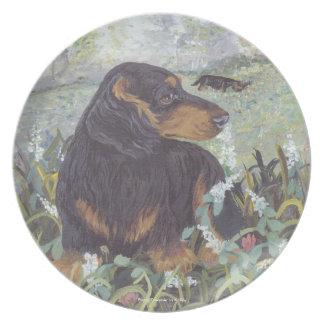 Dachshund Long hair Puppy Dreamer Plate